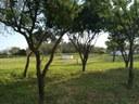 Puesta en marcha de los huertos ecológicos para mayores en el Parque Moret
